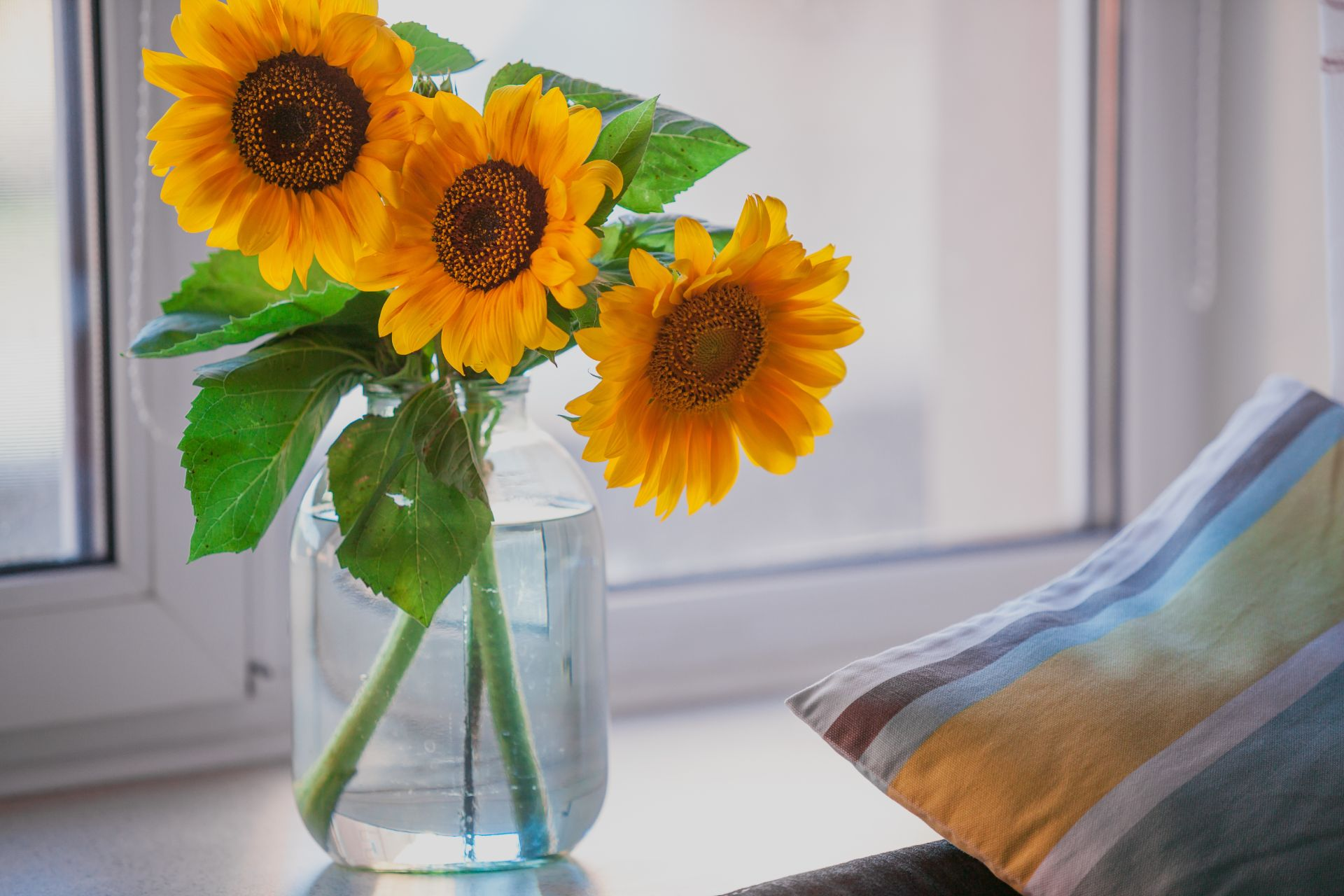 Quick, simple steps for transforming shame associated with overcoming childhood sexual, emotional and physical abuse. Featured image shows a glass vase with three sunflowers sitting on a windowsill next to a striped pillow.
